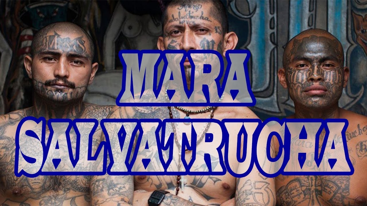 VOICES OF COLOR: EXPOSING THE ROOTS OF MS-13 |
