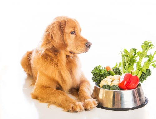 Healthy Nutrition for Your Pet
