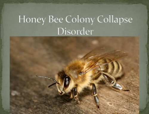Another Honey Bee Die-Off Threatens Food Supply